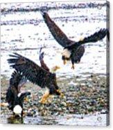 Group Of Eagles Acrylic Print