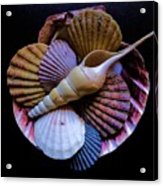 Group Of Shells #1 Acrylic Print