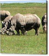 Group Of White Rhino Acrylic Print