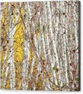 Grove 2 Acrylic Print