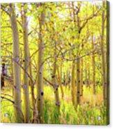 Grove Of Aspens On An Autumn Day Acrylic Print