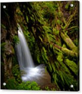 Grove Of Life Acrylic Print by Mike Reid