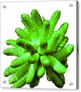 Growing Green Acrylic Print