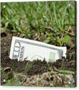 Growing Money Acrylic Print