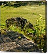 Growing On Rocks. Acrylic Print