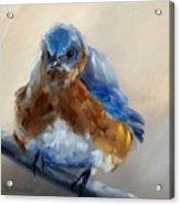 Grumpy Bird Acrylic Print