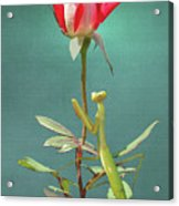 Guardian Of The Rose Acrylic Print