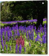 Guardian Of The Lupine Acrylic Print