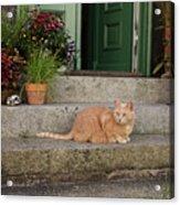 Guarding The Door Acrylic Print