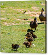 Guarding The Family Acrylic Print