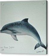 Guiana River Dolphin Acrylic Print