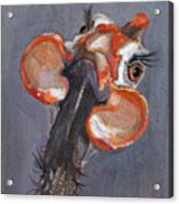 Guinea Love Acrylic Print
