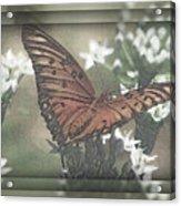 Gulf Fritillary Behind The Screen Acrylic Print
