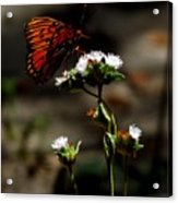 Gulf Fritillary Butterfly Too Acrylic Print