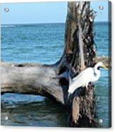 Gulf Shallows Acrylic Print