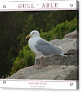 Gull Able Acrylic Print