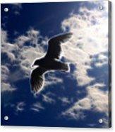 Gull Against Sky Fractal Acrylic Print