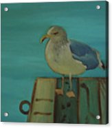 Gull And Ring Acrylic Print