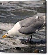 Gull At Surfs Edge Acrylic Print