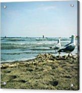 Gull Beach Acrylic Print