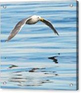 Gull Mirrored Acrylic Print