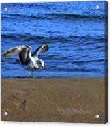 Gull On The Beach  Acrylic Print