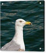 Gull Profile Acrylic Print