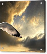 Gull With Approaching Storm Acrylic Print by Meirion Matthias