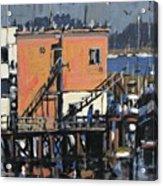 Gulls Aloft Acrylic Print
