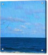 Gulls And Water Acrylic Print