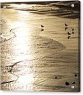 Gulls At Gloucester Acrylic Print