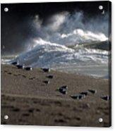 Gulls At Goat Rock Sundown Acrylic Print