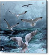Gulls' Banquet Acrylic Print