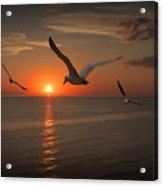 Gulls Flying Towards The Sun Acrylic Print