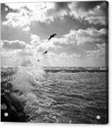 Gulls In A Gale Acrylic Print