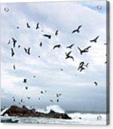 Gulls Of Carmel Acrylic Print