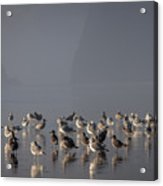 Gulls On A Foggy Beach Acrylic Print
