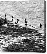 Gulls On The Shore Acrylic Print