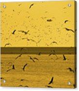 Gulls Orange Tint Acrylic Print