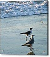 Gulls Strolling Tybee Island Beach Acrylic Print