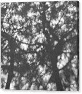 Gunmetal Grey Shadows -  Acrylic Print