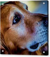 Gus As Photo Assistant 3504 Acrylic Print