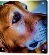 Gus As Photo Assistant 3504t2 Acrylic Print