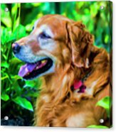 Gus In Flower Bed 10357t2a Acrylic Print