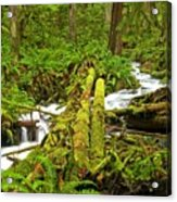 Gushing Through Ferns And Forest Acrylic Print
