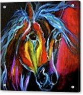Gypsy Equine Acrylic Print