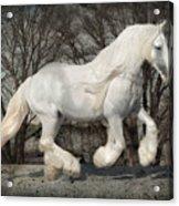 Gypsy Forest Acrylic Print