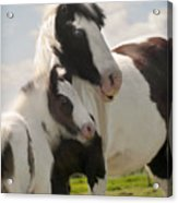 Gypsy Mare And Foal Acrylic Print