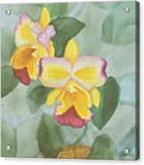 Gypsy Orchids Acrylic Print