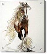 Gypsy Vanner Stallion Acrylic Print